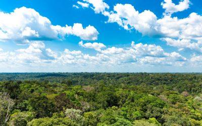 A Amazônia e o inconsciente ou a Amazônia inconsciente