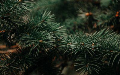 Um Natal essencial